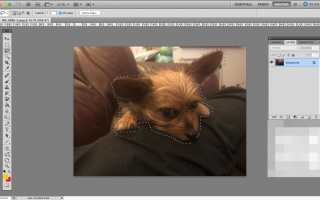 Как использовать инструмент «Уточнить края» в Photoshop