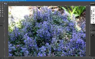 Сделайте ваши фотографии лучше, используя кривые GIMP